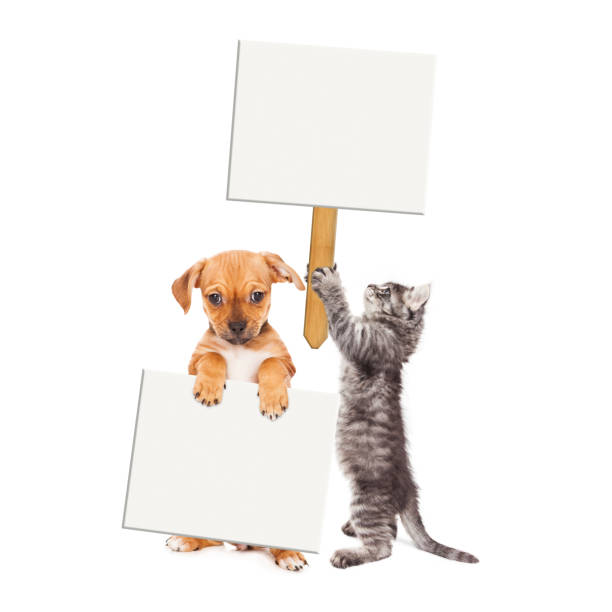 Puppy and kitten holding blank signs picture id664747736?b=1&k=6&m=664747736&s=612x612&w=0&h=a1ngadfpwn0a4nrbv3mdvogllerwhvefyhhisymguzs=