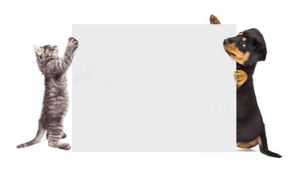 Puppy and kitten holding up blank sign picture id941624848?b=1&k=6&m=941624848&s=612x612&w=0&h=f 1dabokvkzp3urc3ulyqztt9wtrzmhakytcm mgedw=