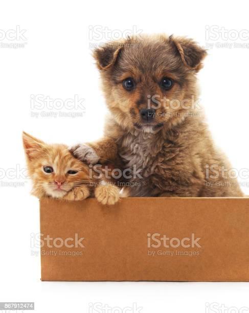 Puppy and kitten in a box picture id867912474?b=1&k=6&m=867912474&s=612x612&h=8bsdt0mu8q1ykbnc1atgqz78go1igo9a1kz2hkaj3iy=