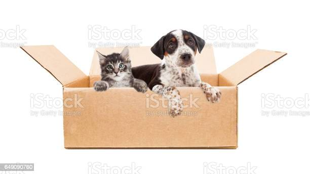 Puppy and kitten in cardboard box picture id649090760?b=1&k=6&m=649090760&s=612x612&h=xg8w6nl6olcnnb5fapok0g0ci0rsqf7ag khkzxycf8=