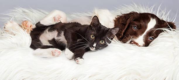 Puppy and kitten laying on furry blanket picture id497154360?b=1&k=6&m=497154360&s=612x612&w=0&h=uxbd0t swoup3tiol6ecphkymnxgc5njr2qb2shrdaq=