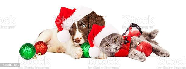 Puppy and kitten laying with christmas ornaments picture id499901610?b=1&k=6&m=499901610&s=612x612&h=xorg8rhwrcmon4snh9b0eqpjftzpuo zy2w34gyy6wa=