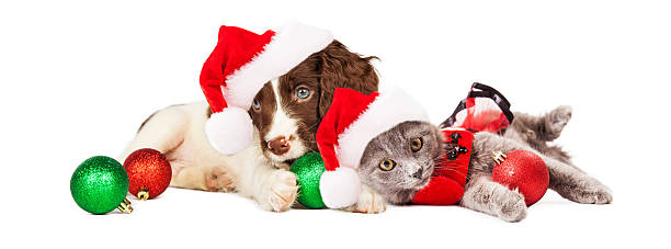 puppy and kitten laying with christmas ornaments - santa hat stock pictures, royalty-free photos & images
