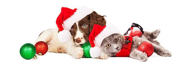 welpen und kätzchen leg dich mit weihnachten weihnachtsschmuck - katze weihnachten stock-fotos und bilder