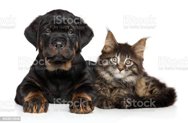Puppy and kitten lying together picture id840824848?b=1&k=6&m=840824848&s=612x612&h=ekouauyoxvlb4nabwtw0ts1nhd7c232mrctc tl4hcq=