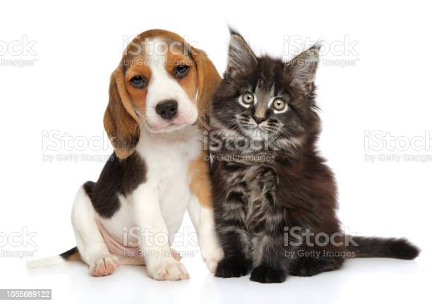 Puppy and kitten on white background picture id1055689122?b=1&k=6&m=1055689122&s=612x612&h=eotpnhyub9yszrynf l40fmn4xyy75bwgnhvpobhlfg=