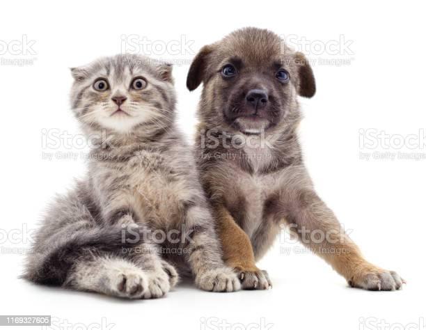Puppy and kitten picture id1169327605?b=1&k=6&m=1169327605&s=612x612&h=jwtimrxyqpffdrgxzjgajgvlrlagqgolox82 llm6cg=