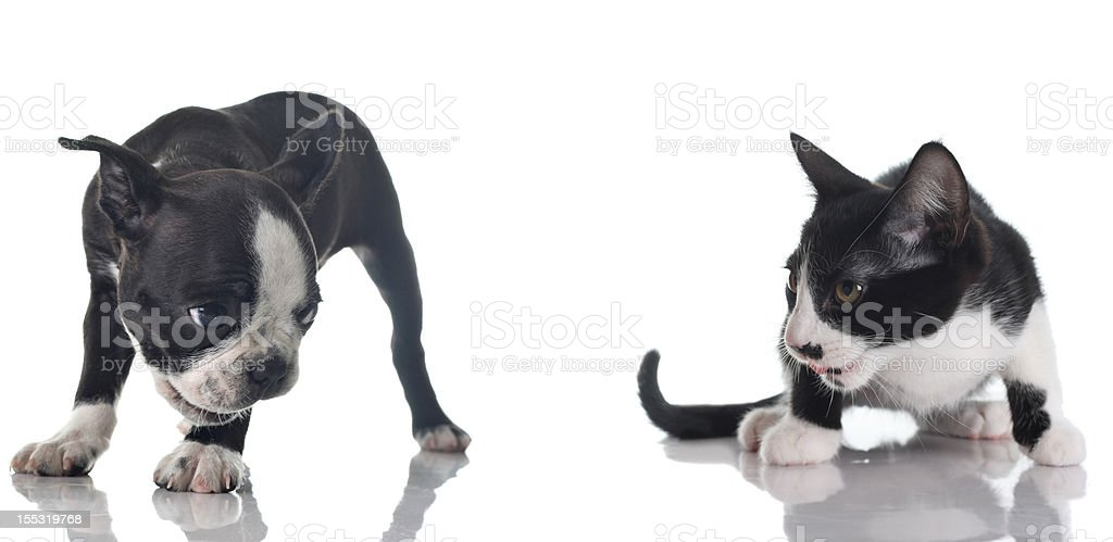 Puppy and kitten royalty-free stock photo