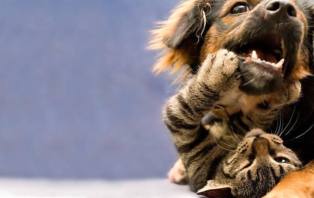 Puppy and kitten picture id178988149?b=1&k=6&m=178988149&s=612x612&w=0&h=2lguqktvhgny60v4fftu6on3fpf vuqlbciesexewps=
