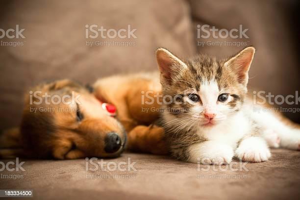 Puppy and kitten picture id183334500?b=1&k=6&m=183334500&s=612x612&h=atoqb9hy6ylduepczmqvxl irp7x3deq67vvd8sunj8=