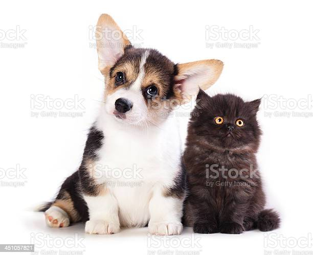 Puppy and kitten picture id451057821?b=1&k=6&m=451057821&s=612x612&h=fpl  wsnhxuikbpa7yddehzf9up8clj1xcxq7uj3ela=