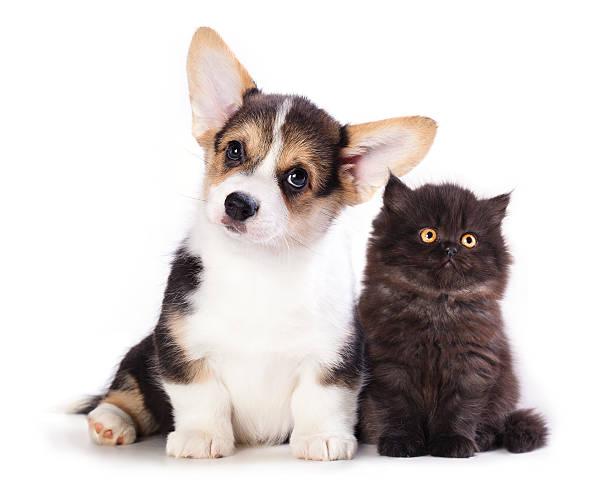 Puppy and kitten picture id451057821?b=1&k=6&m=451057821&s=612x612&w=0&h=06w5l8a8co89uqhy2ujbrllravlorl 2tywvnii7e0u=