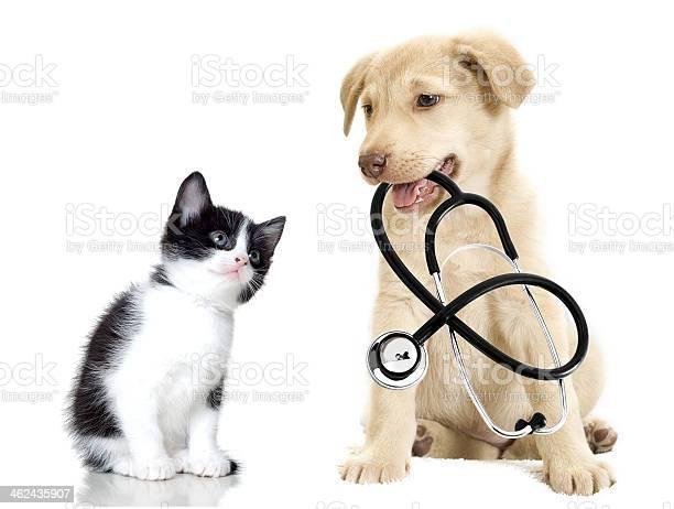 Puppy and kitten picture id462435907?b=1&k=6&m=462435907&s=612x612&h=sfp qjpcghgq7exlk4linwg5j8rhrbhr47pvx9unlzu=