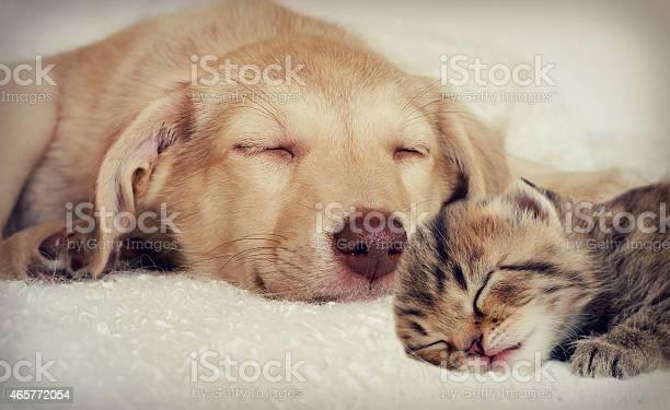 Puppy and kitten picture id465772054?b=1&k=6&m=465772054&s=612x612&h=0fimhv6wmex6iensf usggvn9griuaj0ltvbpwmsehk=
