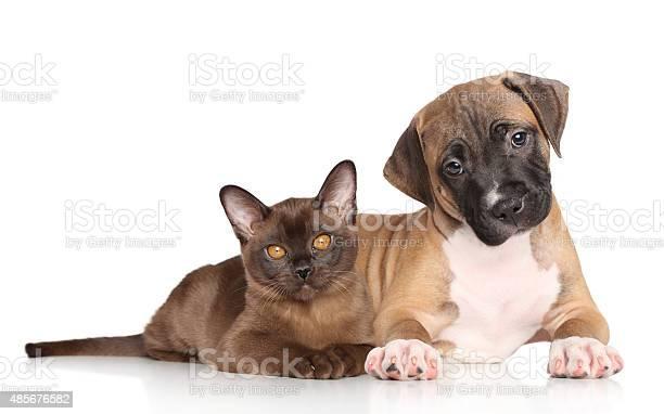 Puppy and kitten picture id485676582?b=1&k=6&m=485676582&s=612x612&h=061wq8tab6nhxzul37iya y7skhj8ucfab7r8xn7bl8=