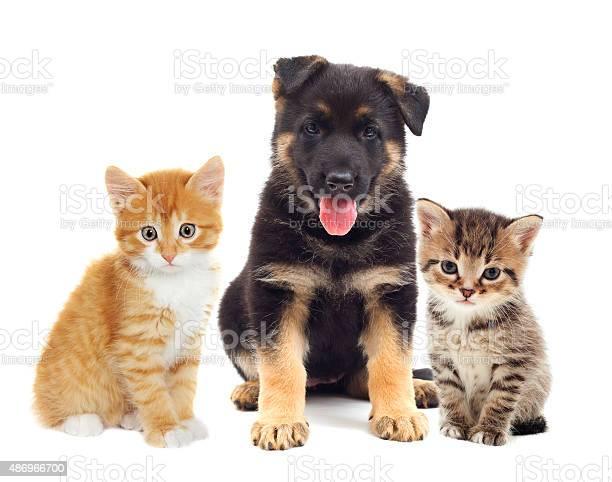 Puppy and kitten picture id486966700?b=1&k=6&m=486966700&s=612x612&h=c84j6yexedncjue2j 1xpqzdrvnrtlux14vcofukrh0=