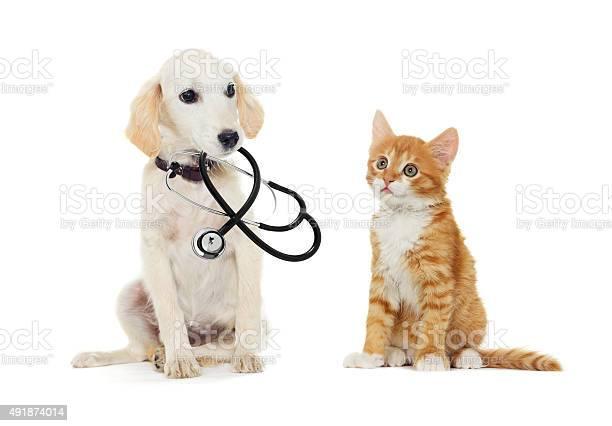Puppy and kitten picture id491874014?b=1&k=6&m=491874014&s=612x612&h= b aifl5otlp x g8t3f3kyhozbpjqpfuxpzkzcqac0=