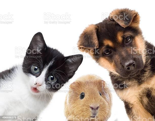 Puppy and kitten picture id496686379?b=1&k=6&m=496686379&s=612x612&h=zdg0wv ufwp2rfmoylioa2snoq6l9vbk36xob5bdec4=