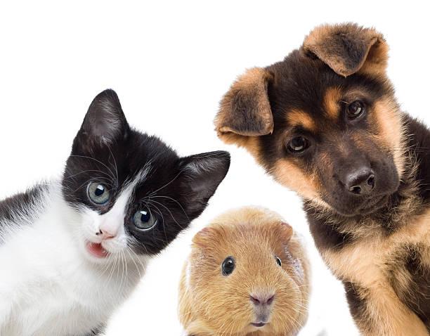 Puppy and kitten picture id496686379?b=1&k=6&m=496686379&s=612x612&w=0&h=7tfs9pszlul4frxgngbz iyzvftkkm3ij8ry27znqao=