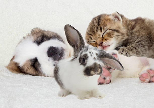Welpen und Kätzchen – Foto