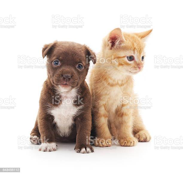 Puppy and kitten picture id543455112?b=1&k=6&m=543455112&s=612x612&h=sklbstzpiba7tvz5mg9fxtqeyqmi6bgygsy0xiuuzxg=