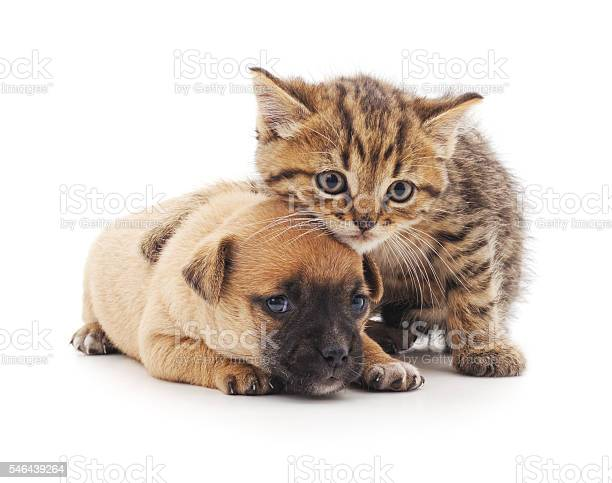 Puppy and kitten picture id546439264?b=1&k=6&m=546439264&s=612x612&h=otowpubmovsgt8mexxtgokakjql4ro5wp8ef3 nanse=