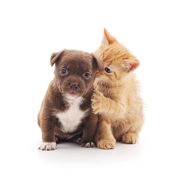 Puppy and kitten picture id585583982?b=1&k=6&m=585583982&s=612x612&w=0&h=oxg5jkqa2ymwh6 qdlv1dyw5mlxtlfk8tepuk2xd3l0=