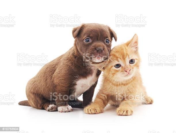 Puppy and kitten picture id610753504?b=1&k=6&m=610753504&s=612x612&h=45funv5nmv7ikyqzwrgbeys0ix1fwnjhzncdmbm477m=