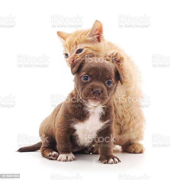 Puppy and kitten picture id613681094?b=1&k=6&m=613681094&s=612x612&h=2qyaze8ndwsbtqwjvkwuka7n nercwe7m2 wnjuqfow=