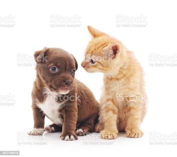 Puppy and kitten picture id652769516?b=1&k=6&m=652769516&s=612x612&h=xmrbnhyse5ptvrucxxmc5one5rbf aln3 jjg0tpxue=