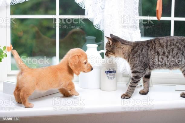 Puppy and kitten picture id665851162?b=1&k=6&m=665851162&s=612x612&h=rhdzbvtefnacimple5blgl2cit obck64kdjnjjgtu8=
