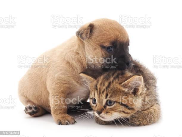 Puppy and kitten picture id820730864?b=1&k=6&m=820730864&s=612x612&h=jushm1p2pqsxs13ieyjo1dpav3ccg6avgchql wpldy=