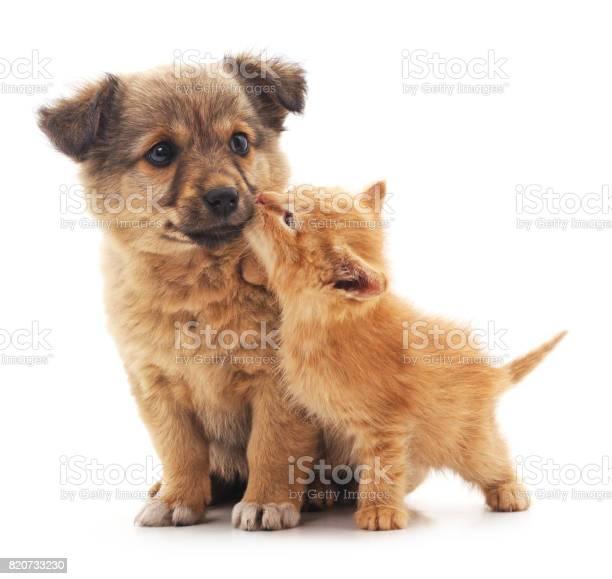 Puppy and kitten picture id820733230?b=1&k=6&m=820733230&s=612x612&h=1tjsb3tnflnxek4 weemhfek f725ux3boumi1zxnhc=