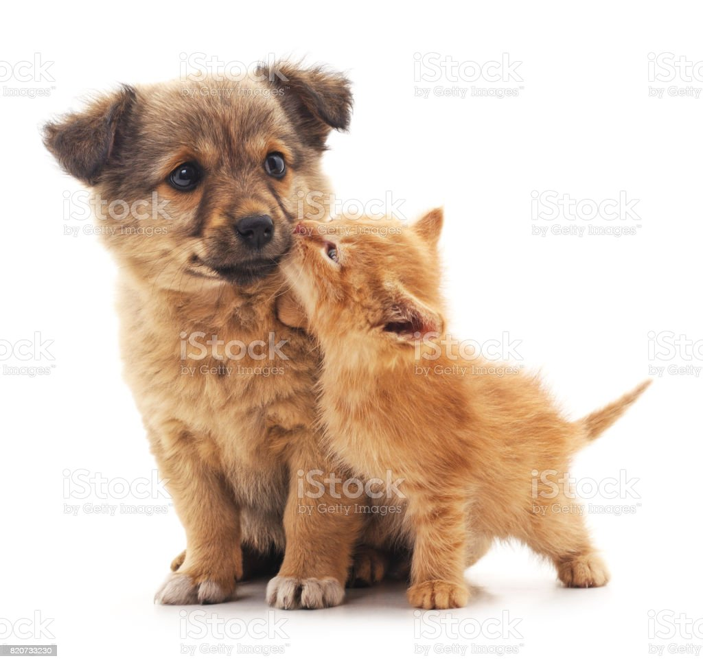 Puppy and kitten. stock photo