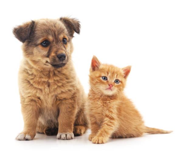 Puppy and kitten picture id820733366?b=1&k=6&m=820733366&s=612x612&w=0&h=9dssycjh4n6qlahjqtjajwolfjbu6mb dnlzitjebbc=