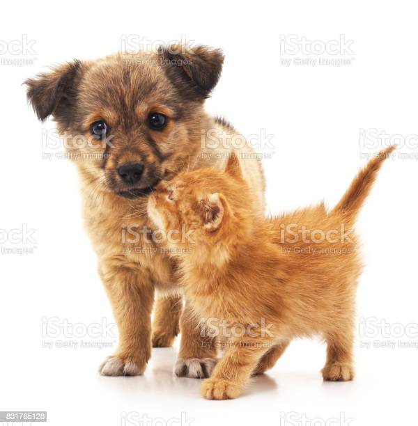Puppy and kitten picture id831765128?b=1&k=6&m=831765128&s=612x612&h=csx6uvmjnpbxakhmlms8 5t7ayaoioejzk7kr0xvwju=