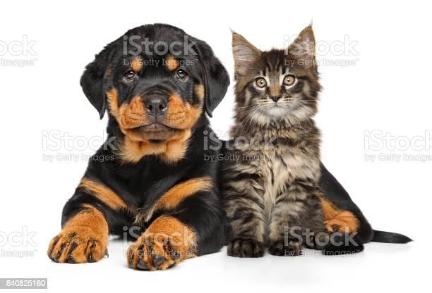 Puppy and kitten picture id840825160?b=1&k=6&m=840825160&s=612x612&h=azqvlgsvxzgujiqzpfnhyjondn9zpq0tneams5qrcqu=