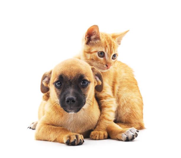 Puppy and kitten picture id855546420?b=1&k=6&m=855546420&s=612x612&w=0&h=epjvt9bpzjsvgnkc0iqq8kv v9vrdf9sotcxep ykmm=