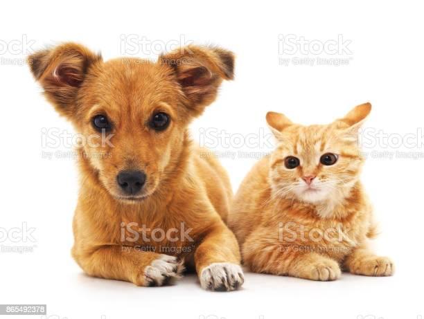 Puppy and kitten picture id865492378?b=1&k=6&m=865492378&s=612x612&h=vmywrfuo1z6blzssgek7dxqdhedpghgcln 9lmvojki=