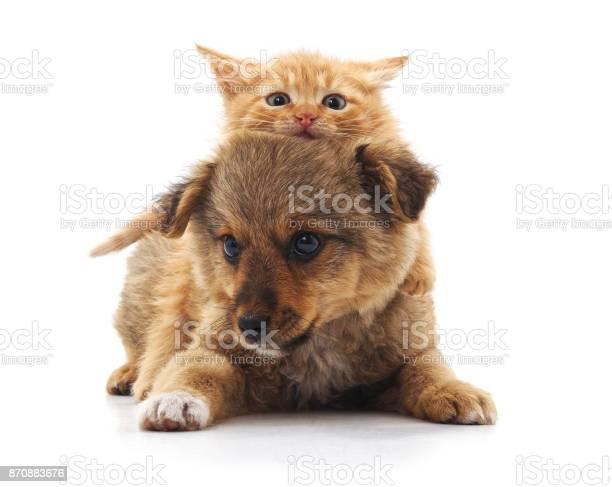 Puppy and kitten picture id870883676?b=1&k=6&m=870883676&s=612x612&h=qoddwhgewsm0ivdjjsfuf0klq5ub9nfcyyhwhsh8un4=