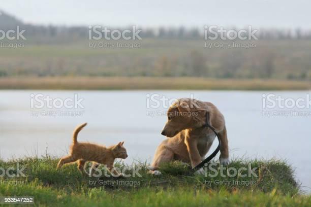 Puppy and kitten picture id933547252?b=1&k=6&m=933547252&s=612x612&h=aplksisujhy4n0wekasf o bahnnil5txszlnwthvdq=
