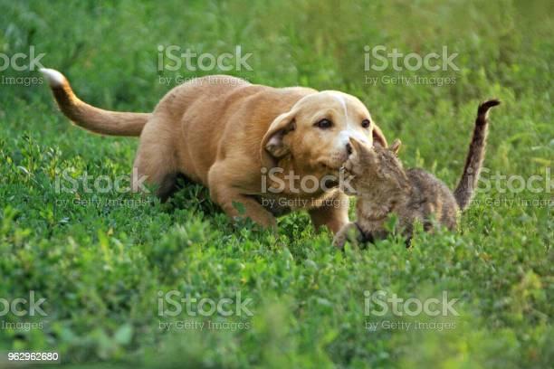 Puppy and kitten playing picture id962962680?b=1&k=6&m=962962680&s=612x612&h=lyklxub6zcapuwcmrmrnkj88vygmoosici wejmcq7c=