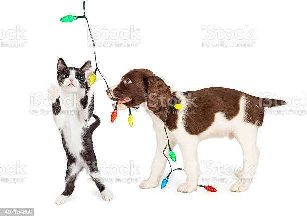 Puppy and kitten playing with christmas lights picture id497154350?b=1&k=6&m=497154350&s=612x612&h=diolgmddnir5xsk obgfgkvq5qg3rg zioutcjpy0ei=