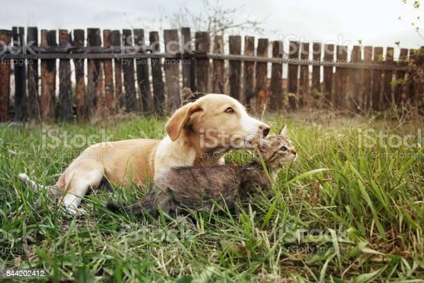 Puppy and kitten rest on glade picture id844202412?b=1&k=6&m=844202412&s=612x612&h= hixti96slj7us39ww8jnvmumgktnxfknr0k8t8dtbg=