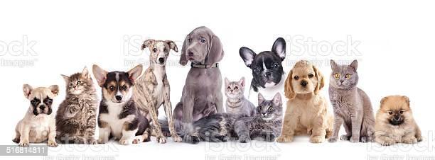 Puppy and kitten set picture id516814811?b=1&k=6&m=516814811&s=612x612&h=0npeo9 jpfkujcda9smqpbuoe9ce6xfdzbrhjvfpfiy=