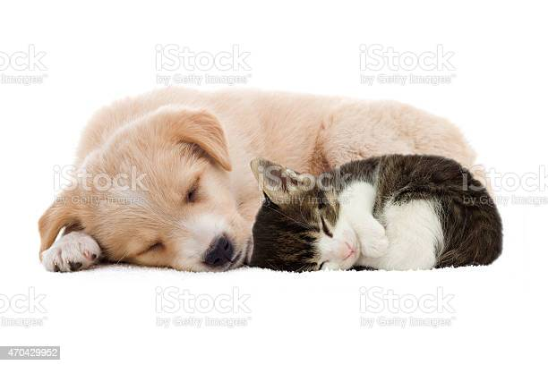 Puppy and kitten sleeping picture id470429952?b=1&k=6&m=470429952&s=612x612&h=9ythunrvqlays3bl16 jme xfwthvjhx54oakv5yfra=