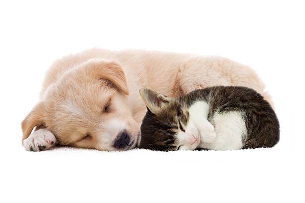 Puppy and kitten sleeping picture id470429952?b=1&k=6&m=470429952&s=612x612&w=0&h=pcbbl9p bvhmf87q89p70xw9igtnnyqqeffzdbrhbwk=