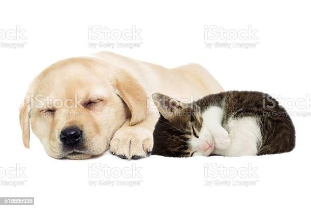 Puppy and kitten sleeping picture id519895938?b=1&k=6&m=519895938&s=612x612&h=s1fniioad etq50l7qznuevypgsgmzwusgl0pvs27fy=