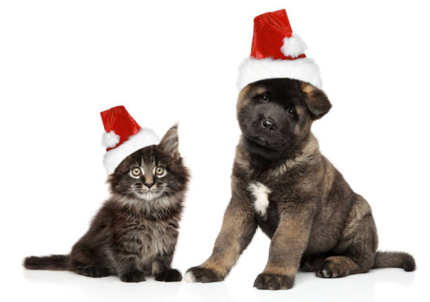 Puppy and kitten together in santa hats picture id1069312134?b=1&k=6&m=1069312134&s=612x612&w=0&h=by1q bwjzu lz6qfpxnlp5iujrnd9 7loohqe3n spk=