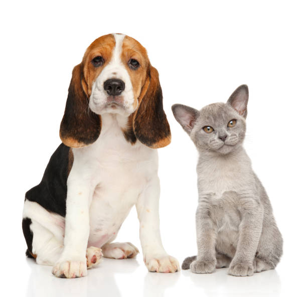 Puppy and kitten together picture id840825030?b=1&k=6&m=840825030&s=612x612&w=0&h=jigbrd1y30t8spcypcaf1dcyyagaqcr bvyuy0uulkc=